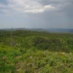 Žvilgsnis į Juoduosius miškus