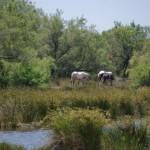 laisvi [sąlyginai] arkliai