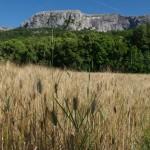 link Plan-d'Aups-Sainte-Baume